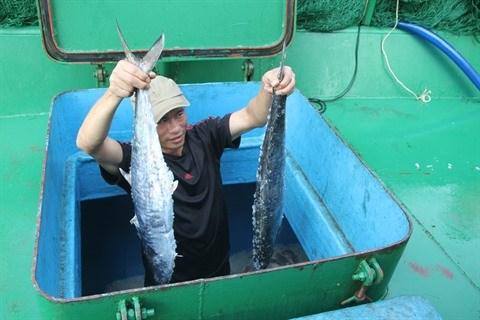 Formosa : un an apres, la vie reprend son cours hinh anh 2