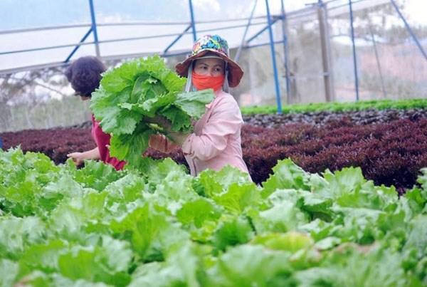 Accelerer la cooperation dans l'agriculture biologique hinh anh 1