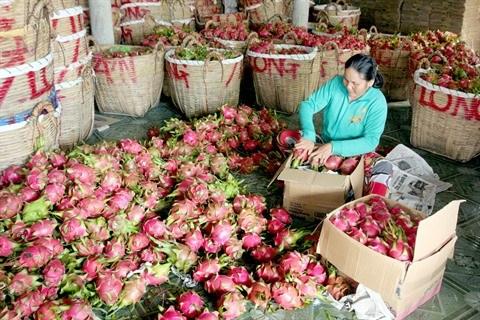 Les fruits vietnamiens conquierent les marches etrangers hinh anh 1