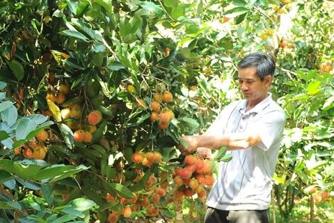 Les fruits vietnamiens conquierent les marches etrangers hinh anh 2