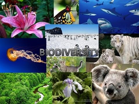 L'ambassade de France au Vietnam celebre la biodiversite hinh anh 1