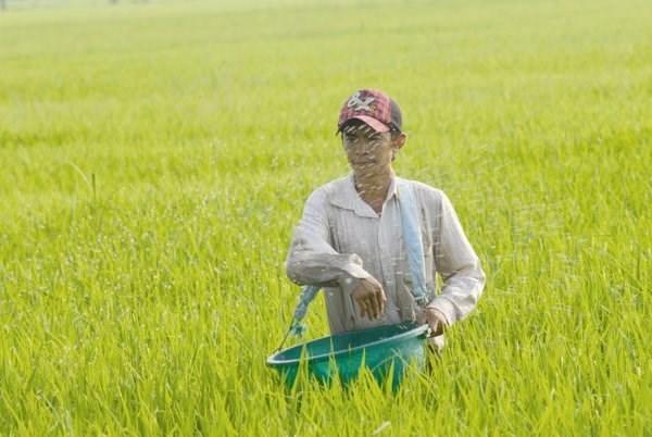 La Chine, premier fournisseur d'engrais du Vietnam hinh anh 1