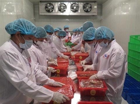 Irradiation de 1,2 tonne de litchis pour export en Australie hinh anh 1
