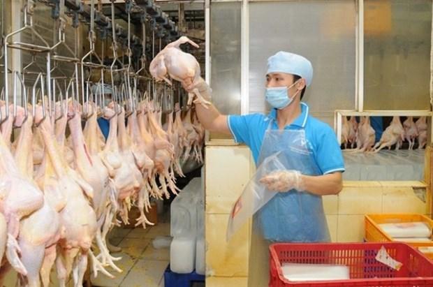 Pres de 400 tonnes de viande de poulet seront exportees vers le Japon hinh anh 1