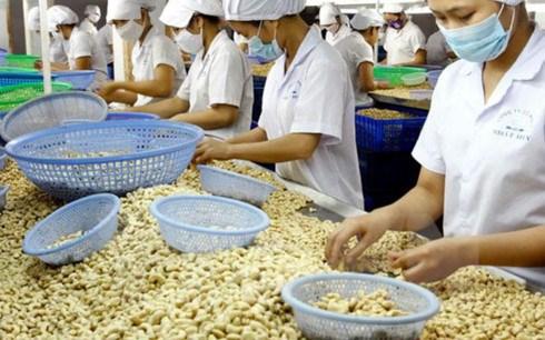 La filiere de la noix de cajou vise 3,3 milliards de dollars d'exportation hinh anh 1