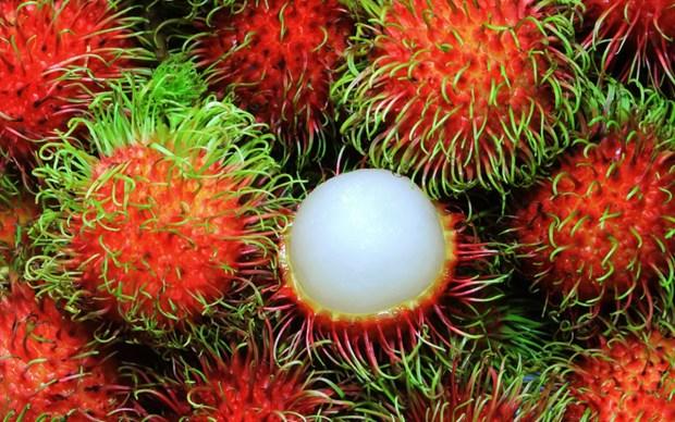 Le ramboutan du Vietnam sera exporte vers la Nouvelle-Zelande hinh anh 1