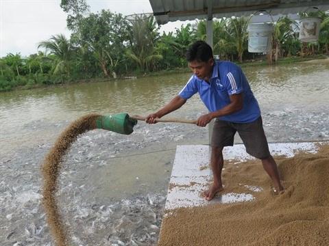 Les exportations de pangasius estimees a 1,7 milliard de dollars cette annee hinh anh 1