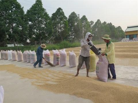 Plus de 4,5 millions de tonnes de riz exportees en neuf mois hinh anh 1
