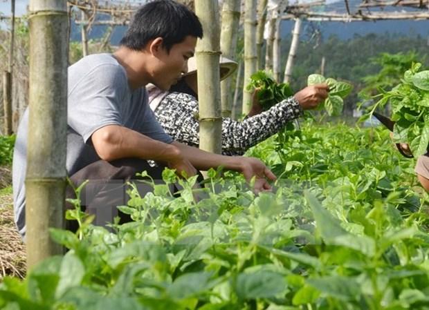 Agriculture : Dien Bien renforce la cooperation avec des localites laotiennes hinh anh 1