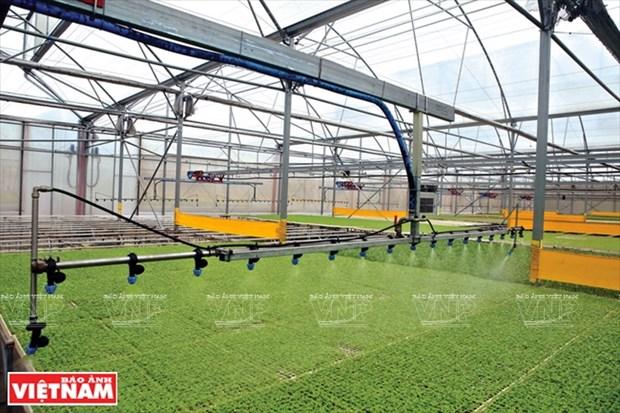De nombreux obstacles pour le developpement d'une agriculture high-tech hinh anh 1