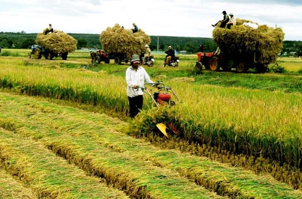 En 2020, le revenu des ruraux augmenterait d'au moins 1,8 fois par rapport a 2015 hinh anh 1