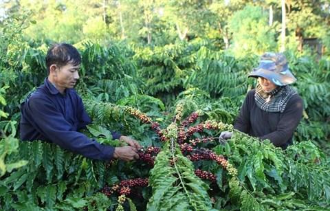 Lam Dong celebre la premiere Journee du cafe du Vietnam hinh anh 1