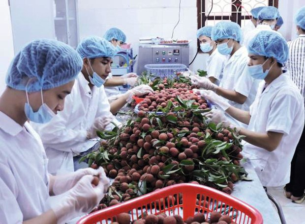 Plus de 3,5 milliards de dollars d`exportations de fruits et legumes en 2017 hinh anh 1