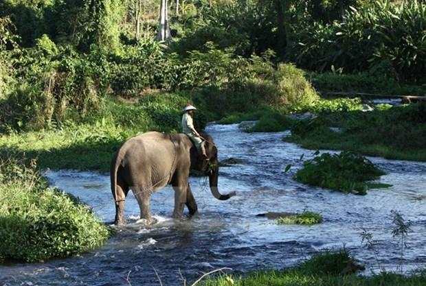 La province de Dak Lak renforce la protection des elephants hinh anh 1