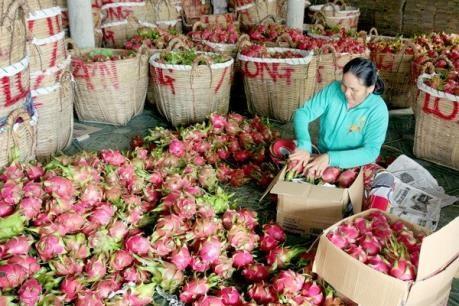 Exportation de pitayas en Chine hinh anh 1