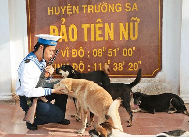 Des chiens sur l'archipel de Truong Sa hinh anh 1