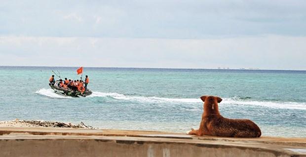Des chiens sur l'archipel de Truong Sa hinh anh 3