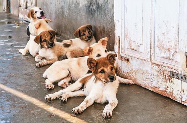 Des chiens sur l'archipel de Truong Sa hinh anh 2
