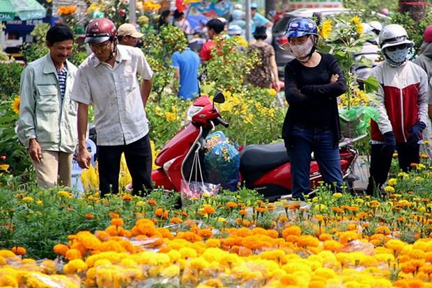 Tet : forte augmentation des importations de fleurs et de bonsais hinh anh 1
