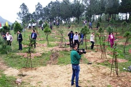 Lancement de la fete de la plantation d'arbres a Thua Thien-Hue hinh anh 1