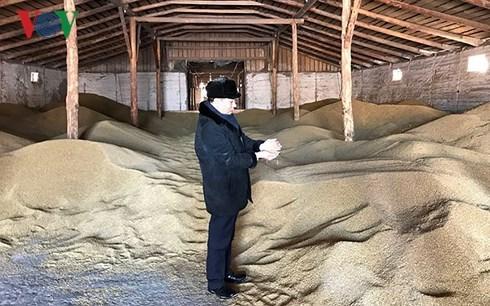 Tran Ngoc Tuan, un fermier vietnamien en Russie hinh anh 1