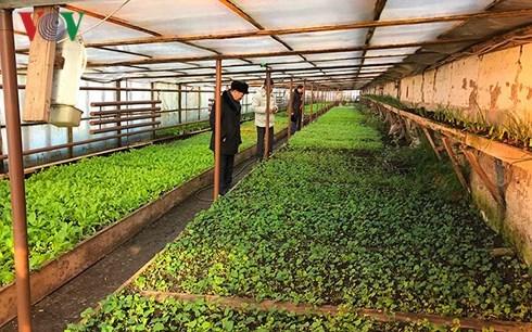 Tran Ngoc Tuan, un fermier vietnamien en Russie hinh anh 2