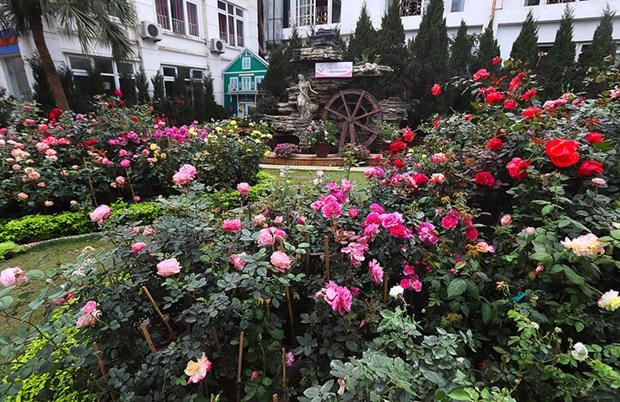 Ouverture de la Fete des roses de la Bulgarie a Hanoi hinh anh 1