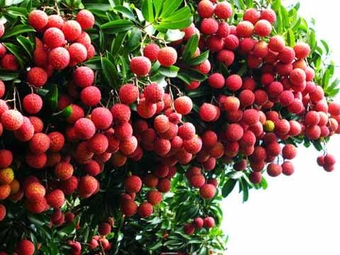 Les fruits vietnamiens sont de plus en plus attrayants aux Etats-Unis hinh anh 1