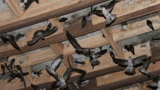 Promotion des exportations de nids de salanganes hinh anh 1