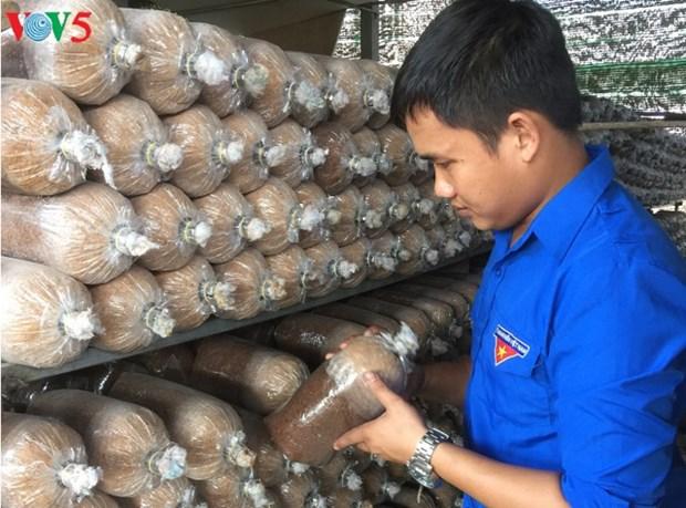 Bui Minh Thang, la passion des champignons hinh anh 1
