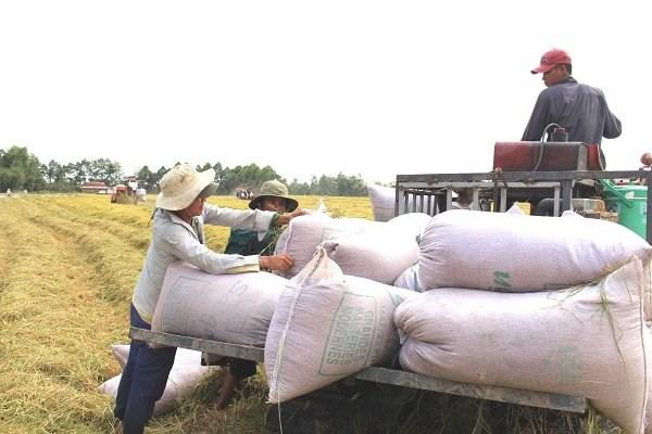 De belles perspectives pour les exportations nationales de riz hinh anh 1