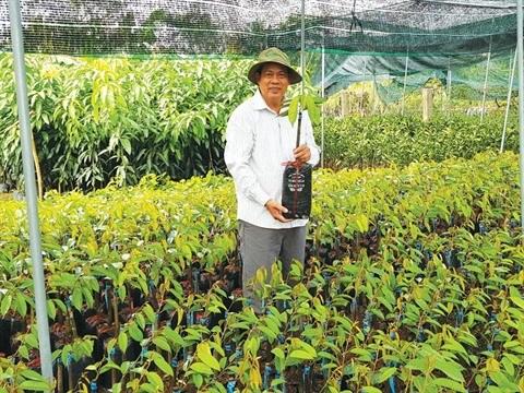 La culture des semis : une opportunite en or pour les paysans de Ben Tre hinh anh 1