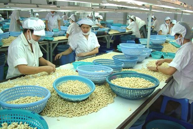 L'exportation de noix de cajou atteint plus de 1,3 milliard de dollars en cinq mois hinh anh 1