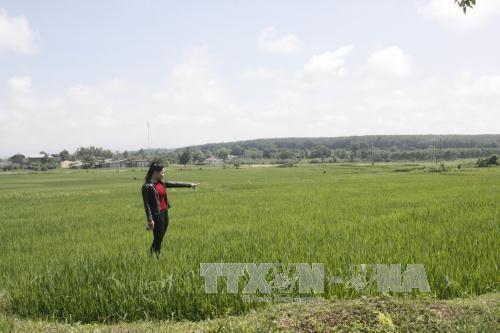 Octroi de plus de 160.000 tonnes de riz a la province de Kon Tum hinh anh 1