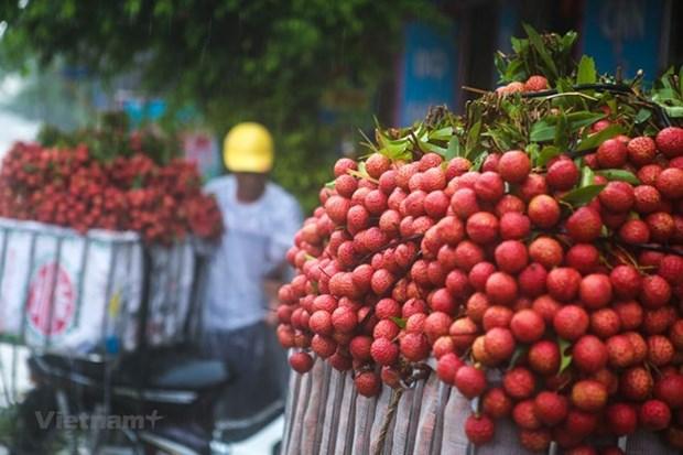 Superbe saison du litchi dans la province de Bac Giang hinh anh 1
