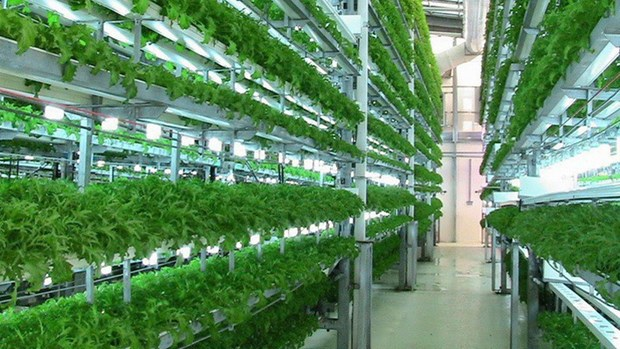 De nombreuses entreprises agricoles technologiquement avancees obtiennent des licences commerciales hinh anh 1