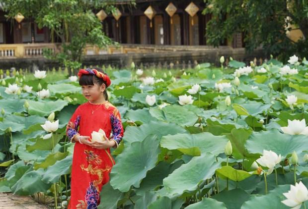 Une variete precieuse de lotus blancs se developpe a Dai Noi hinh anh 4