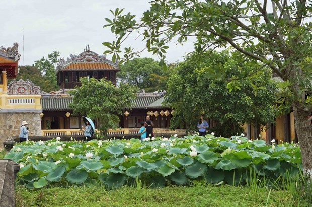 Une variete precieuse de lotus blancs se developpe a Dai Noi hinh anh 1
