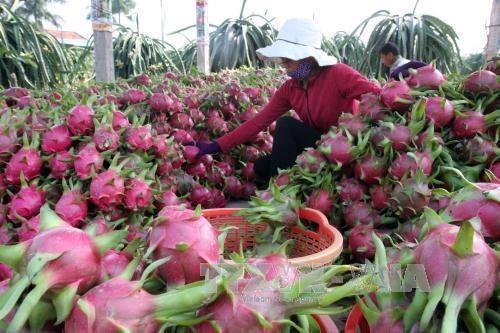 Promotion de l'attrait de l'investissement dans l'agriculture hinh anh 1