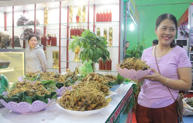 Ouverture du deuxieme festival du ginseng de Ngoc Linh a Quang Nam hinh anh 1