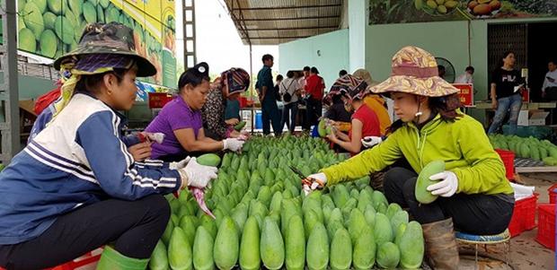 Son La atteint une percee dans l'exportation des produits agricoles hinh anh 1