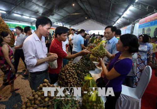 Ouverture de la Fete des longanes de Hung Yen 2018 hinh anh 1