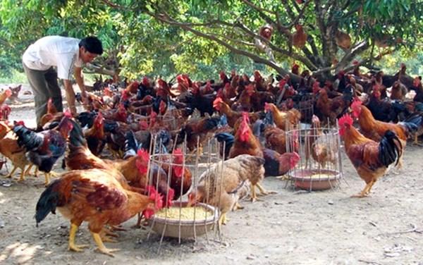 Hanoi met en place 80 chaines d'approvisionnement en produits agricoles sains hinh anh 1