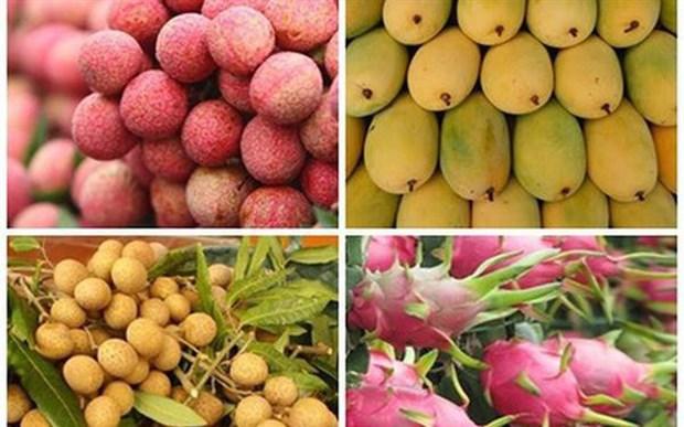 Les exportations de fruits et legumes du Vietnam devrait depasser 4 milliards de dollars hinh anh 1