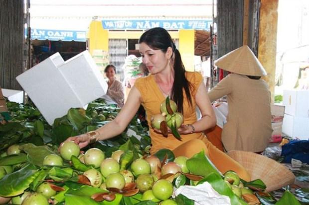 Exportation de pommes de lait Lo Ren de Tien Giang vers les Etats-Unis hinh anh 1