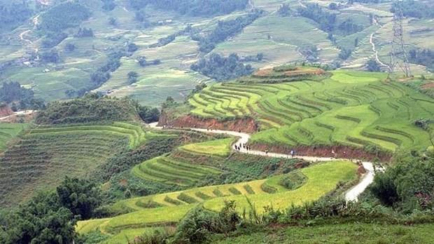 Les rizieres en terrasse du Vietnam : l'un des paysages les plus surrealistes sur Terre hinh anh 1