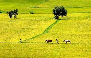 Le Vietnam, l'un des pays les plus pacifiques du monde hinh anh 1