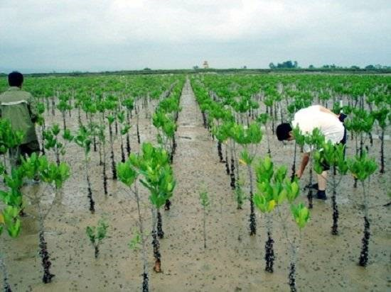 Le GCF aide Quang Nam a renforcer sa resilience au changement climatiquem hinh anh 1
