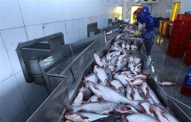 Aquaculture : Exportation de plus d'un millard de dollars en deux mois hinh anh 1
