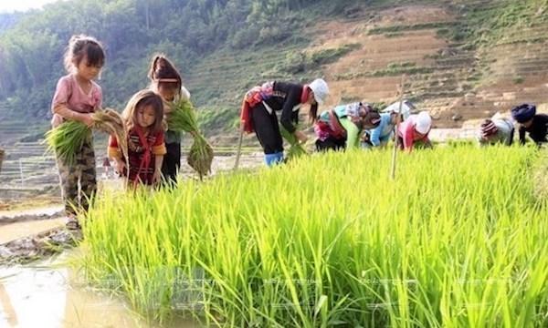 Dialogue sur les politiques liees au travail des enfants a Hanoi hinh anh 1